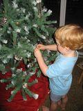 Tree trimming, brushing 033