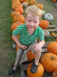 Pumpkin patch 005