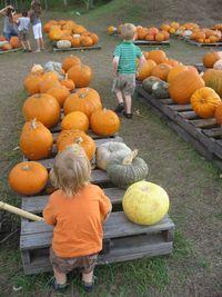 Pumpkin patch 008