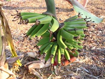 Bananas_and_pj_pants_002_2