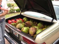 Coconuts_007