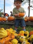 Pumpkin_patch_005