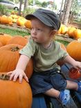Pumpkin_patch_014