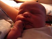 Dexters_birth_045