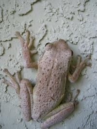 Froggy_1