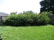 Landscapingstart