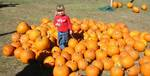 Pumpkin_patch1