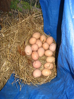 School_and_eggs_012_1